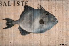 Planche Baliste (format 32/20)