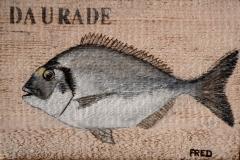 Planche Daurade (format 30/20)