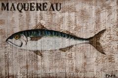 Planche Maquereau (format 33/21)